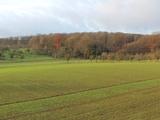 Traumhafte Lage am Bad Homburger Wald. Modernisierungsbedürftiges 2-Familienhaus mit großem Garten. 649832